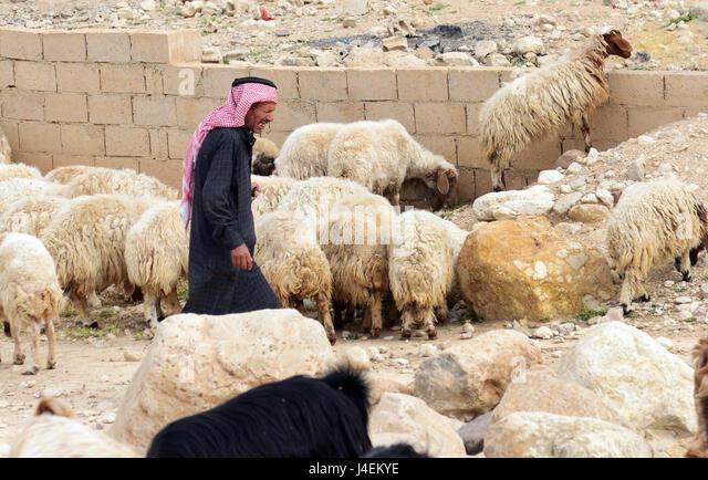 A Jordanian man herding his sheep, - Stock Image