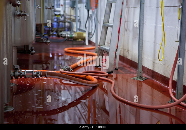 Overflown beer on the floor in a brewery - Stock Image