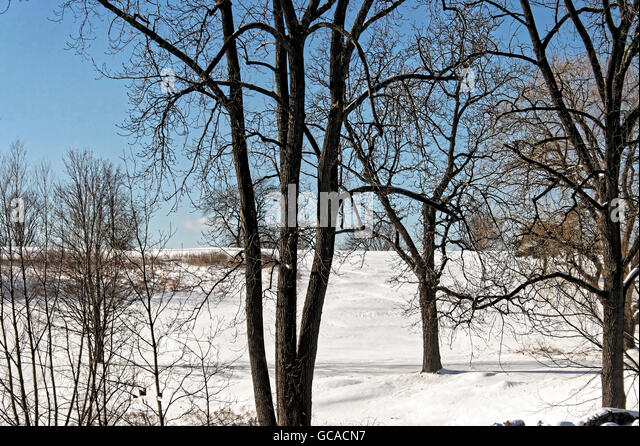 Snowy Winter landscape with bare trees. - Stock Image