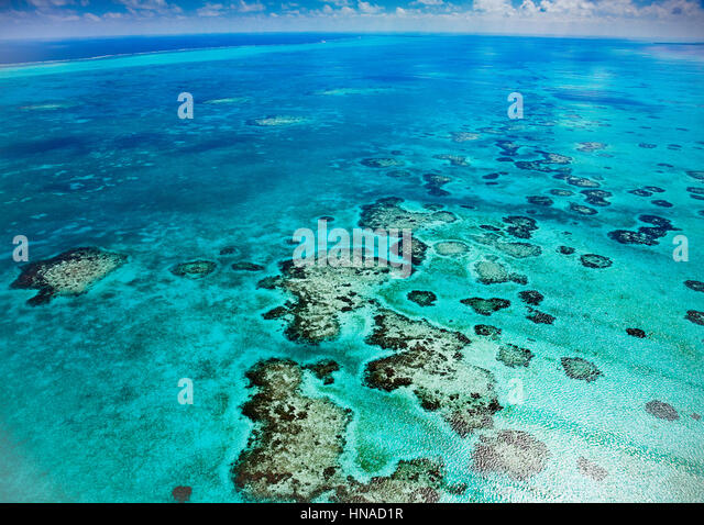 Reef detail, Belize, Caribbean Sea MesoAmerican Reef Reserve, Lighthouse Reef Atoll, Largest reef in Western Hemisphere. - Stock-Bilder
