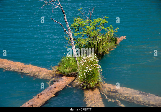 Chinese water plants stock photos chinese water plants stock images alamy - Flowers that grow on tree trunks ...