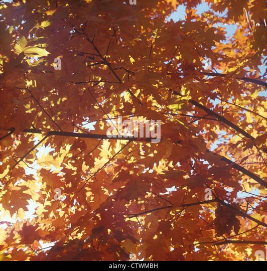 Autumn leaves. - Stock-Bilder