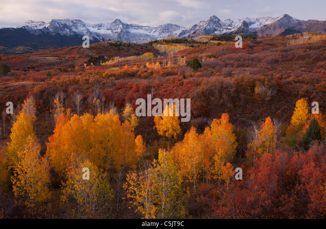 Autumn colors and the Sneffels Range, San Juan Mountains, Dallas Divide, Colorado. - Stock-Bilder