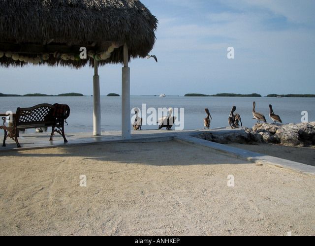 Florida Pelicans resting on Boat Jetty - Stock Image