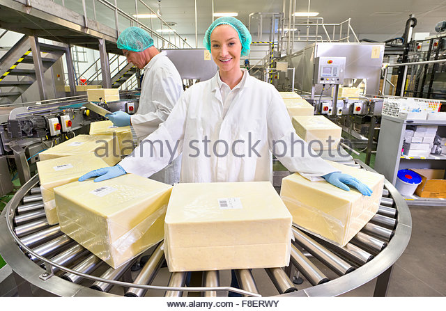 Portrait confident worker handling large blocks of cheese at production line in processing plant - Stock Image
