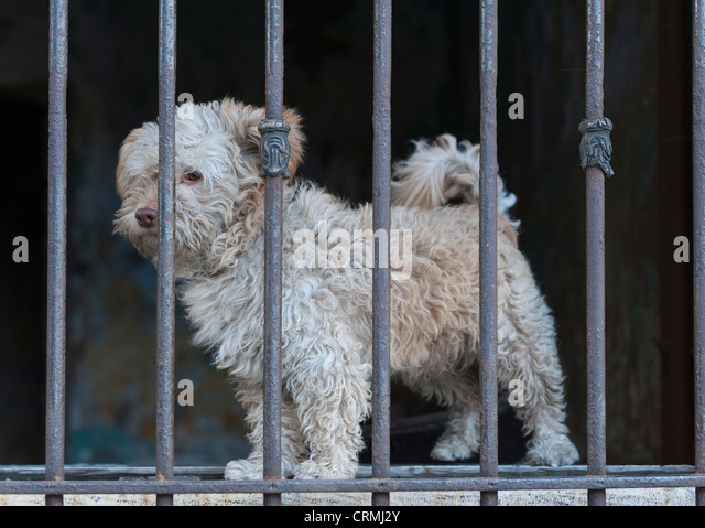 A dog behind a barred window in back street Istanbul - Stock Image