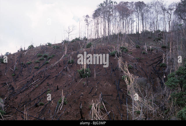 Hillside with cut burnt timber after clearance for crop planting - Stock Image