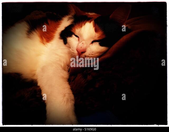 Sleeping kitty - Stock-Bilder