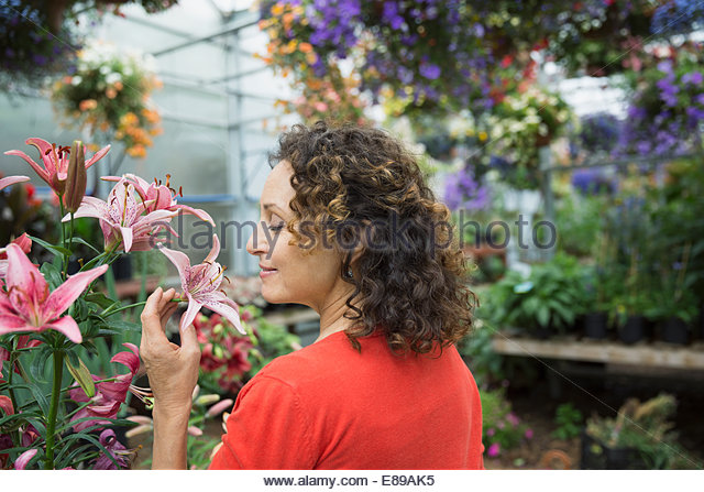 Woman smelling pink lily in plant nursery greenhouse - Stock Image
