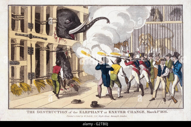 Belch, William - print; engraving - The Destruction of the Elephant destroyed at Exeter 'Change' - - Stock Image