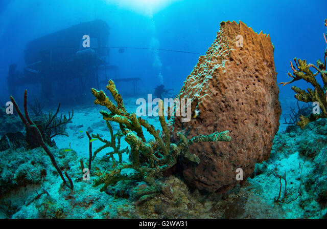 Mysteries of the undersea world are explored at the Aquarius Reef Base, seen in the background of this underwater - Stock-Bilder