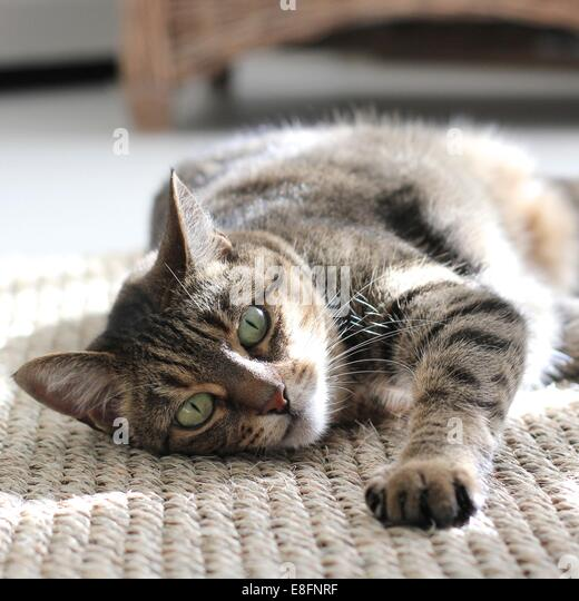 Cat lying on carpet - Stock-Bilder