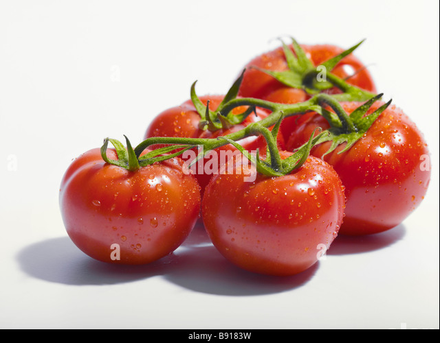 Fresh vine tomatoes - Stock Image
