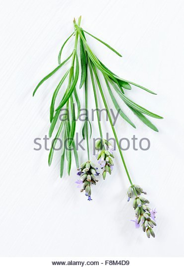 Lavender with flowers - Stock Image