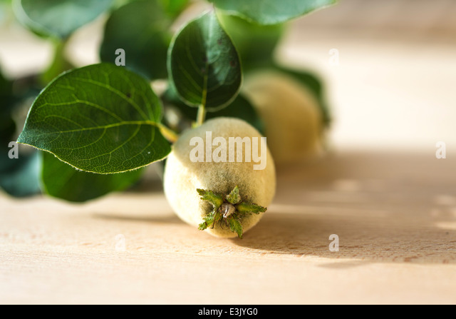 sprig of young quince fruits,with leaves on light wood table. - Stock Image