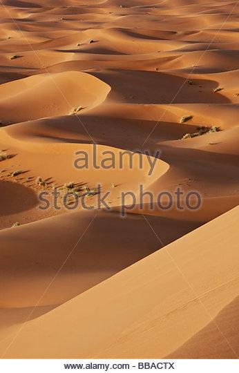 sand dunes in the Sahara desert in evening light - Stock Image
