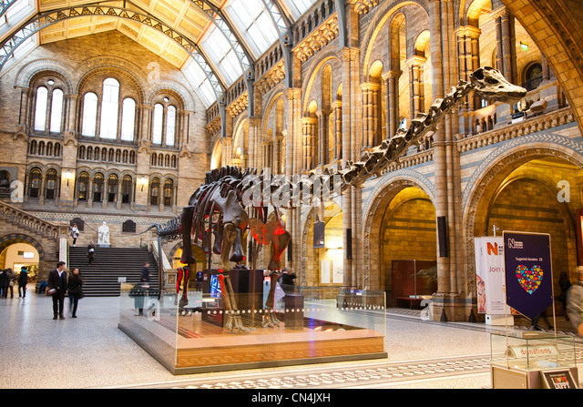 A dinosaur exhibit inside the main foyer of the Natural History Museum in London Britain - Stock Image