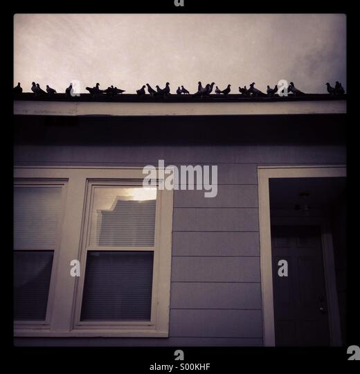 Pigeons on a roof. - Stock-Bilder