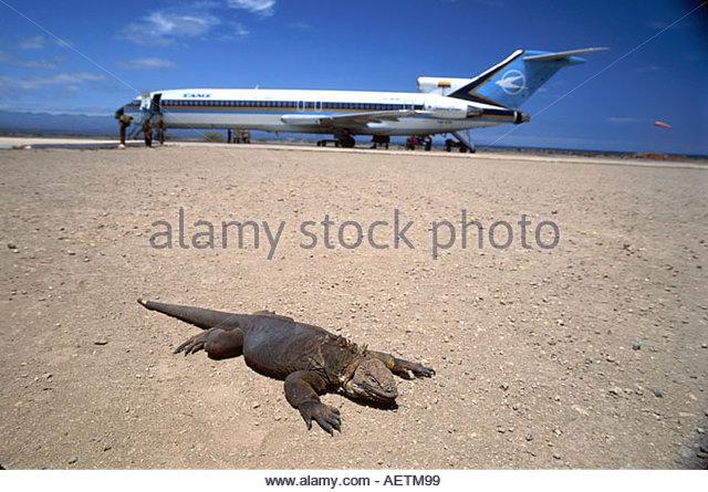 Ecuador Galapagos Islands Isla Baltra airport land iguana Tama Airlines passenger jet - Stock Image