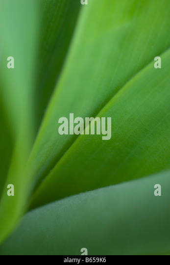 Green leaves, extreme close-up - Stock-Bilder
