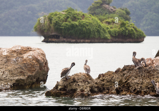 Los Haitises National Park, Samana, Dominican Republic. - Stock Image