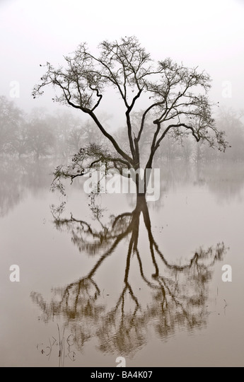Tree and reflection in water - Stock-Bilder