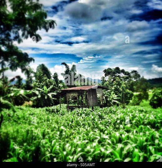 Rustic shack Thailand - Stock Image