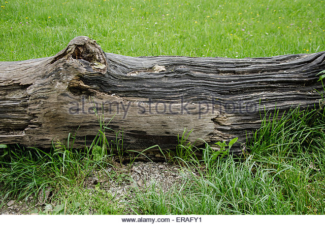 rotten log in a meadow graphic design - Stock Image