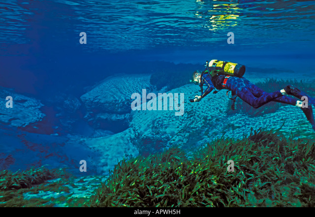 Florida underwater fresh water spring diving Alexander Springs,Ocala National Forest, diver in large open basin - Stock Image