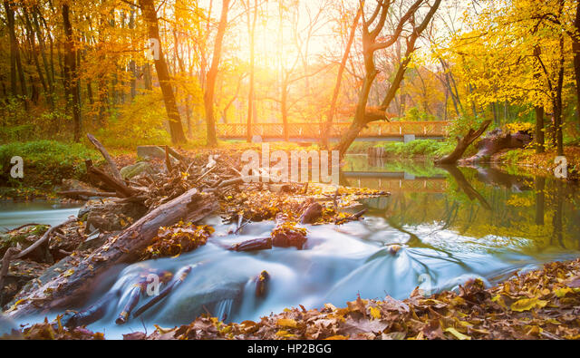 Autumn river and forest - Stock Image