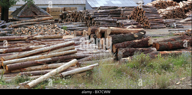 Logs timber industry trunks stacked outdoor stock - Stock Image