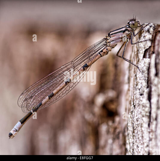 Close up of dragonfly on bark - Stock-Bilder