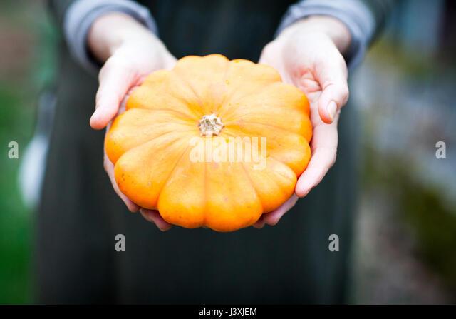 Hands of female gardener holding orange squash vegetable - Stock Image