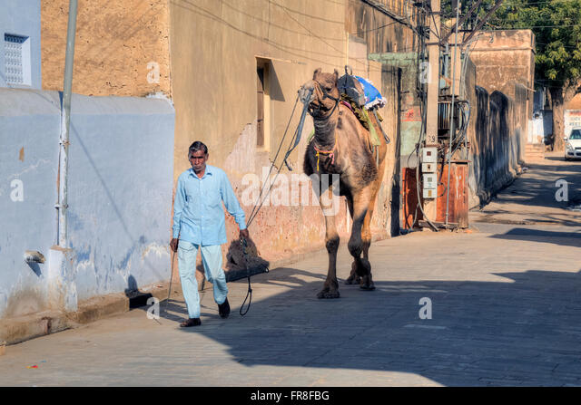 street scene with camel in Mandawa, Jhunjhunu, Rajasthan, India, Asia - Stock-Bilder