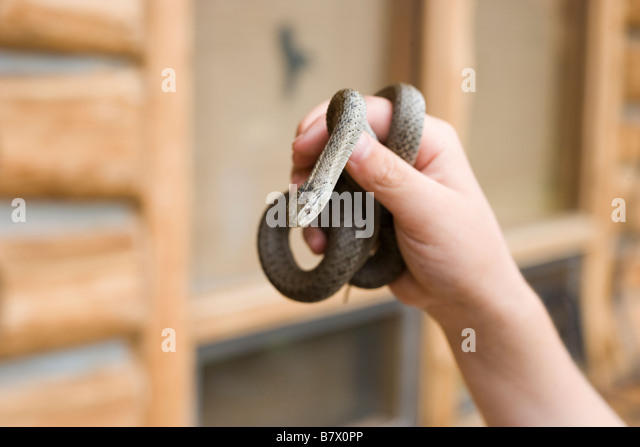 close up of a hand holding garter snake - Stock-Bilder