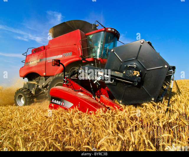 Agriculture - Close up of a Case IH combine harvesting wheat in the Palouse region / near Pullman, Washington, USA. - Stock Image