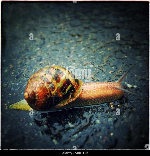 Snail on the road - Stock Image