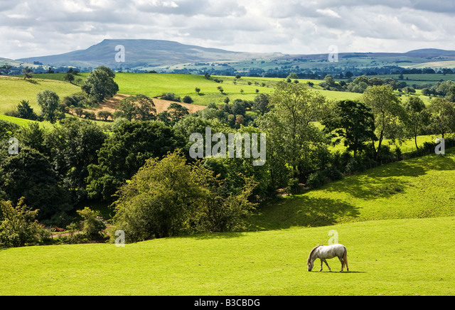 Teesdale countryside looking towards Pen y Ghent, North Yorkshire, England, UK - Stock-Bilder