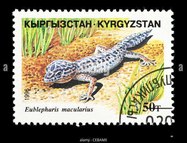 Postage stamp from Kazakhstan depicting a small lizard  (Eublepharis macularius) - Stock Image
