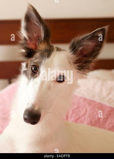 puppy on bed - Stock-Bilder