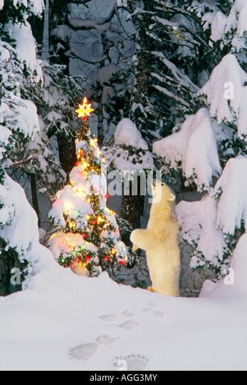 Polar bear cub standing on hind legs looking star on christmas tree in forest Alaska Winter Composite - Stock-Bilder
