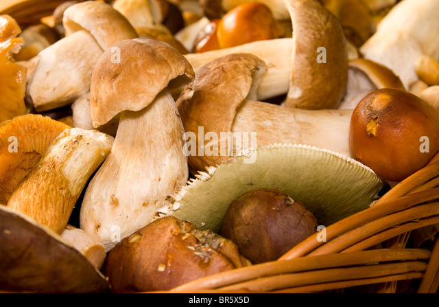 Basket with edible mushrooms. Fungus. - Stock Image