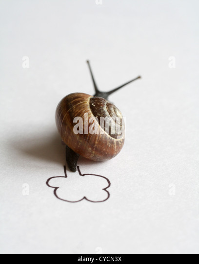 snail,snail pace,snail race - Stock Image