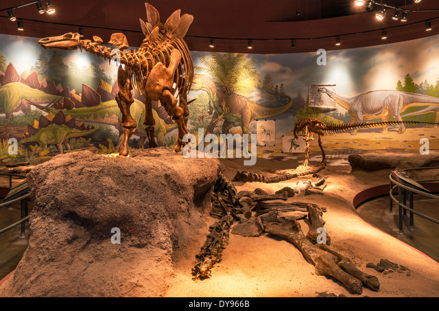 Foyer Museum Utah : Natural history museum of utah stock photos