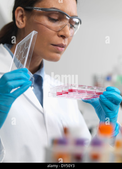 Stem cell research. Female scientist examining cell cultures in multiwell tray - Stock-Bilder