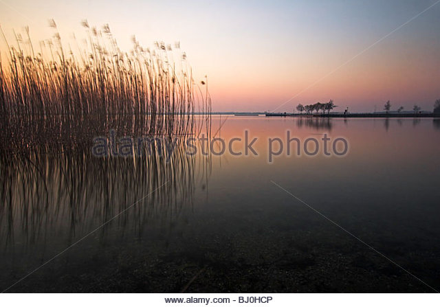 delicate coloured sunset with reeds in the water Mecklenburg-Western Pomerania Mecklenburg-Vorpommern Germany - Stock Image