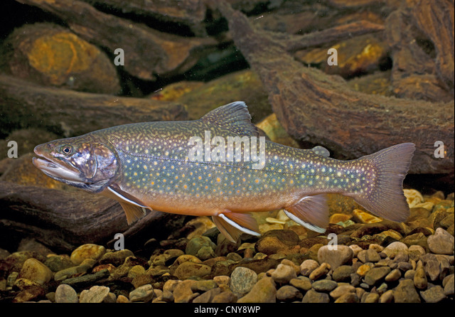 how to catch arctic char