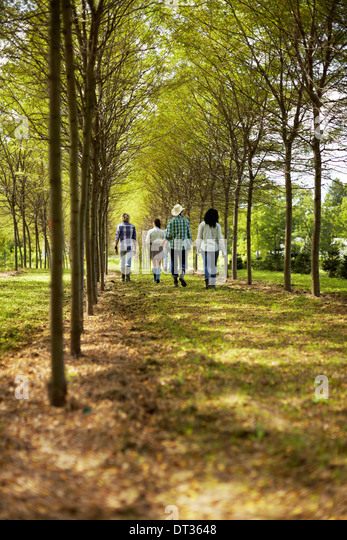 A group of friends walking down an avenue of trees in woodland - Stock Image