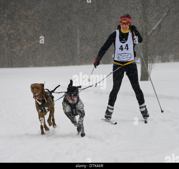 Female racing in a snowstorm harnessed to two dogs in a skijoring event Marmora Canada Snofest - Stock Image