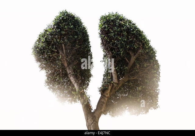 Lung Tree - Stock Image